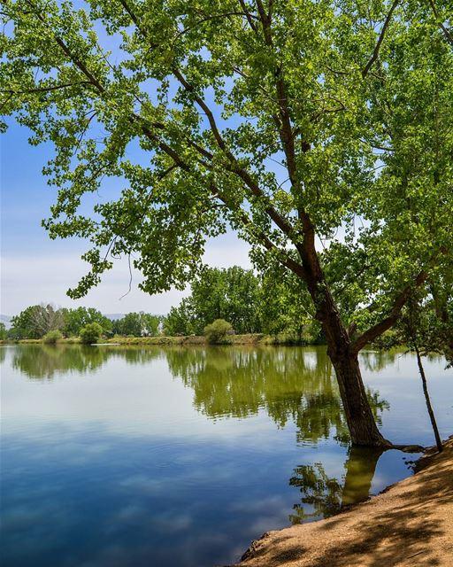 .Summer is here! Taanayel Lake, Bekaa 30-4-2017 Good evening dear IGers... (Taanayel Lake)