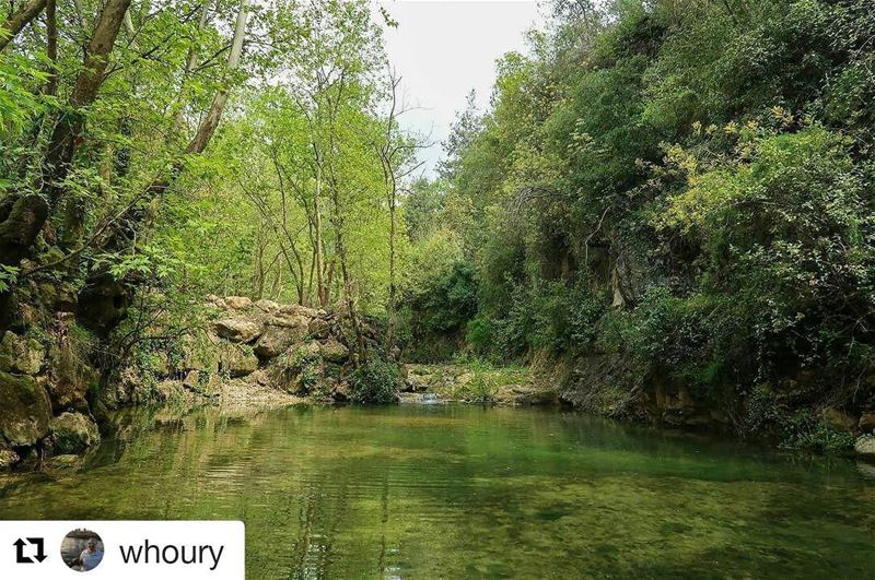 Repost @whoury ・・・ baakline waterland watercolor nature naturewalk...
