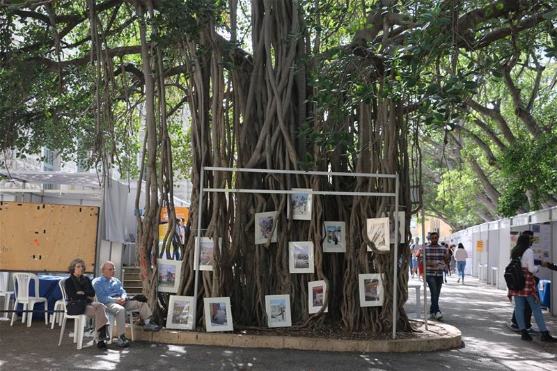 Hanging on the tree... aub ngo aubcampus onthetree trees banyantree ... (American University of Beirut (AUB))