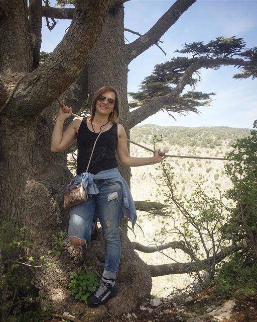 hiking cedars Lebanon ... (Tannourine Cedars Nature Reserve)