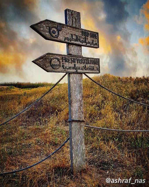وإمشي على طرقات منسيّةدنية غياب ورح يبيت الطير...انطر شي إيد تسلّم علييش (Tyre Coast Nature Reserve - محمية شاطئ صور الطبيعية)