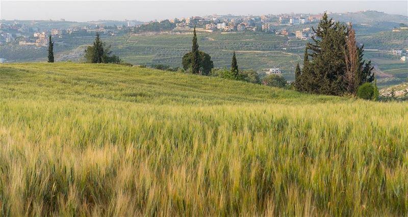 Spring fields lebanon vsco ... (Doueir)