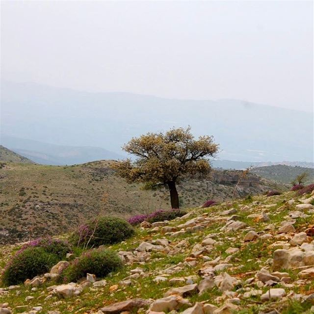 """No winter lasts forever; no spring skips its turn"". lebanon lebanese ..."