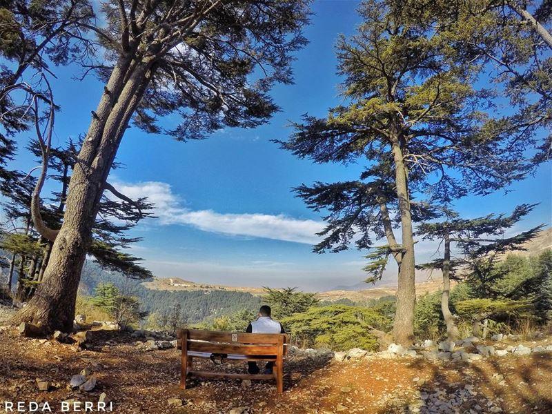 Taking a break mylebanon proudlylebanese whatsuplebanon super_lebanon ... (Tannourine Cedars Nature Reserve)