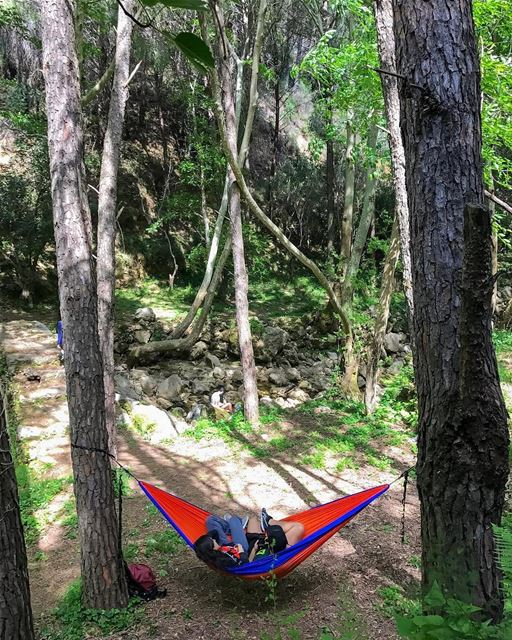 These trees were definitely made for a hammock😋 HikeMen3alli2📸 by @haig