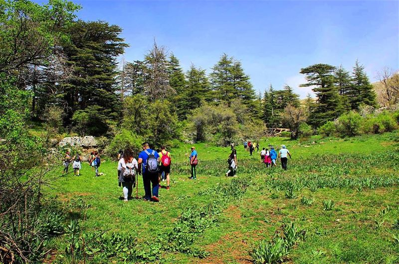 LET'S FIND SOME BEAUTIFUL PLACE TO GET LOST 🌲🌾👣🍃 ... (Horsh Ehden Nature Reserve)