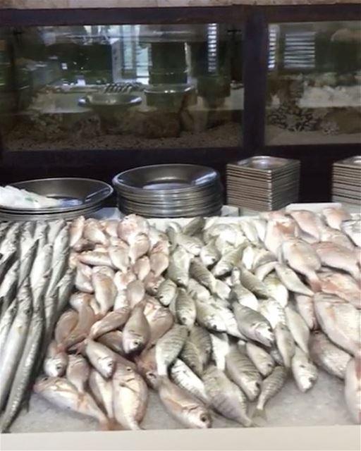 Os melhores frutos do mar do Líbano no espetacular restaurante Al Sultan... (Al Sultan Brahim)