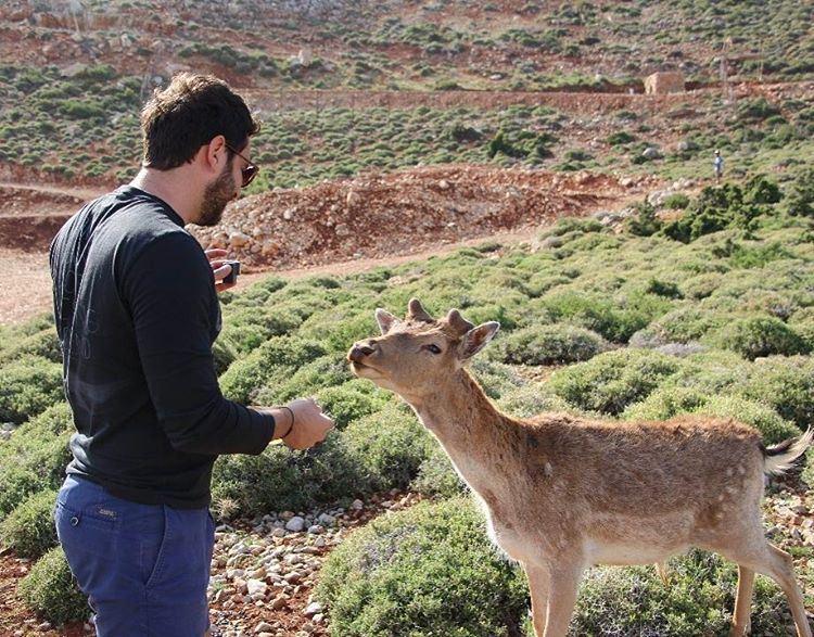 Hello Deer 🦌📸 @plus961 Livelovebeirut Bekaa Deer lebanon ... (West Bekaa)