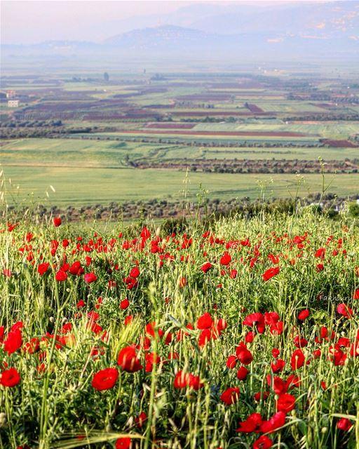 Spring breeze over our fields @livelovemarjeyoun (Marjayoûn, Al Janub, Lebanon)