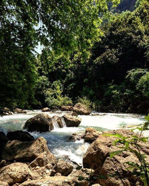 💚 lebanon river trees photooftheday instagallery picoftheday instamoments... (Nahr Ibrahim, Mont-Liban, Lebanon)