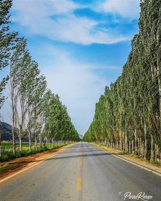 road to infinity ... lebanon ammiq landscape trees sky symetry ...