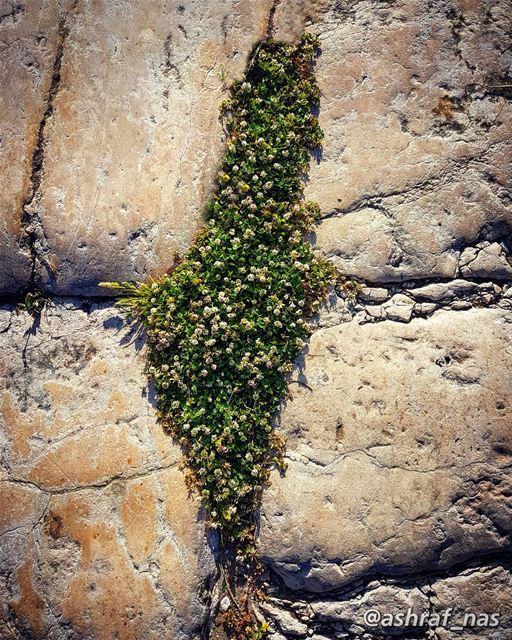 أنا لا أنساكِ فلسطينُويشدّ يشدّ بِيَ البعدُ...أنا في أفيائك نسرينُ أنا ز (Roman ruins in Tyre)