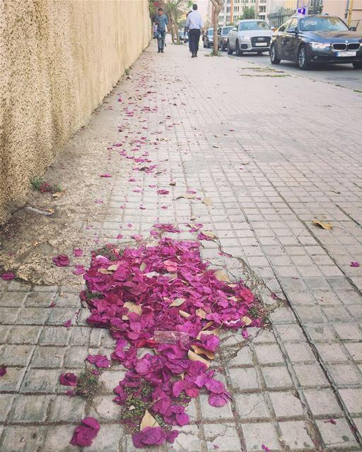 Path of petals 🍃... livelovelebanon lebanon beirut achrafieh ... (Damascus Road, Beirut)