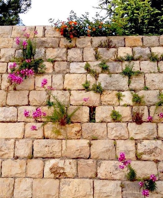 stonewall wall stones flowers beautiful deirelqamar ...