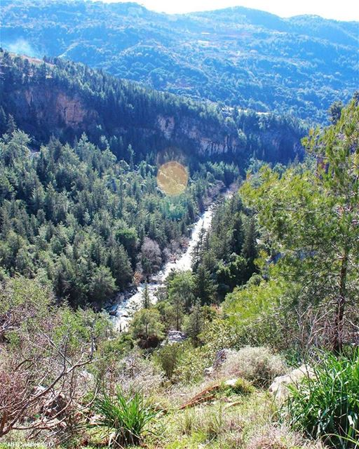 tb kfarmatta mountlebanon mountains forest river valley trees ... (Kfarmatta)
