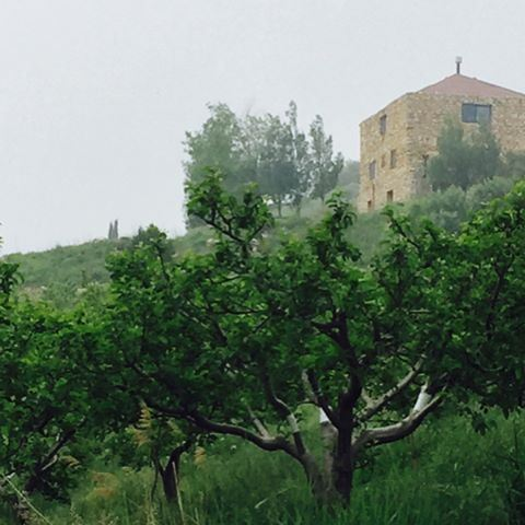 shambouk qoubayat getaway weekend husbandandwife nature mood trees peace... (Al Qubayyat, Liban-Nord, Lebanon)