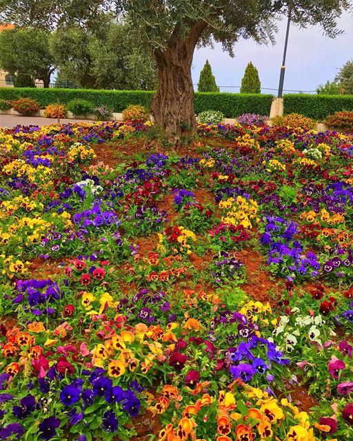Real spring 🎊 @whatsuplebanon reposted💐• lebanonhouses ... (Notre Dame de Louaize)