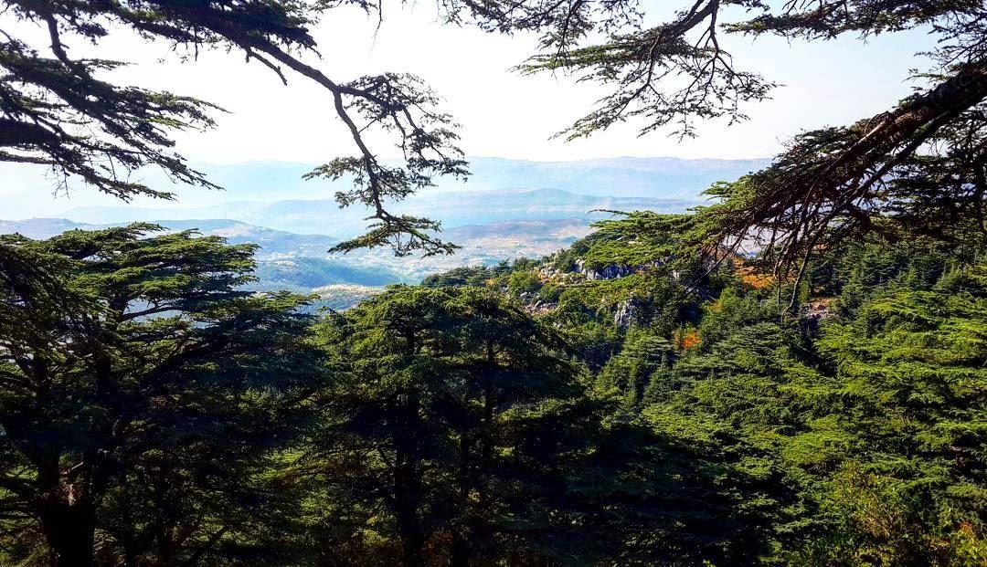 Missing the woods. Lebanon barouk arzelbarouk baroukcedars cedars ...
