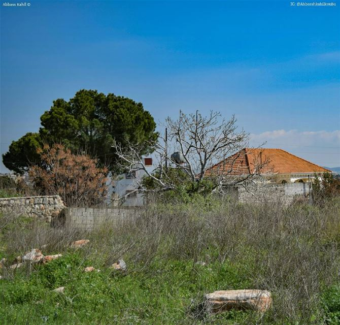 ".• "" Bricks and trees ""• Location: Nabatiyeh City | South of Lebanon @liv"