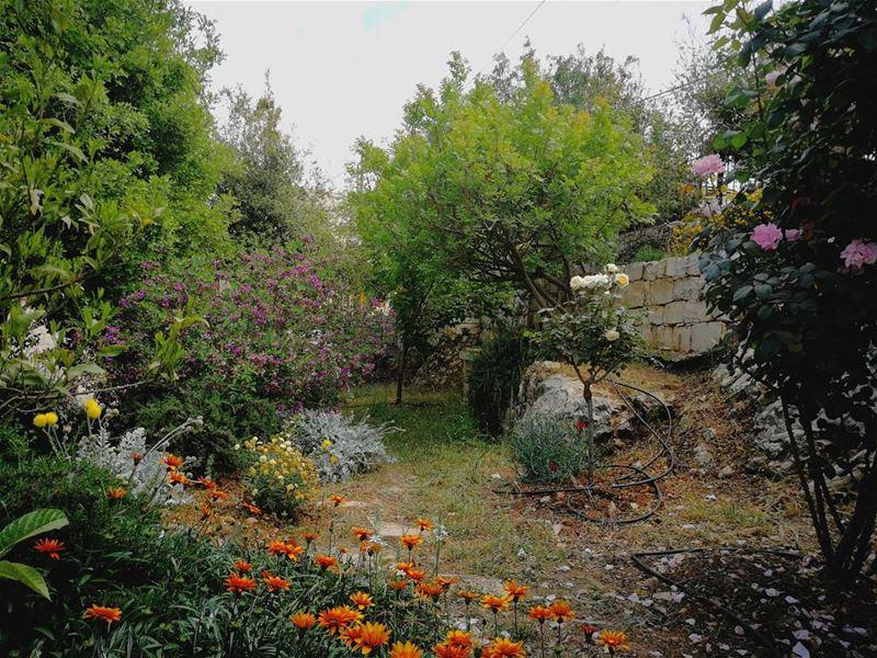 💚 garden jardin plants trees village greenery flowers sunny ... (Les Terrasses de Abdelli)