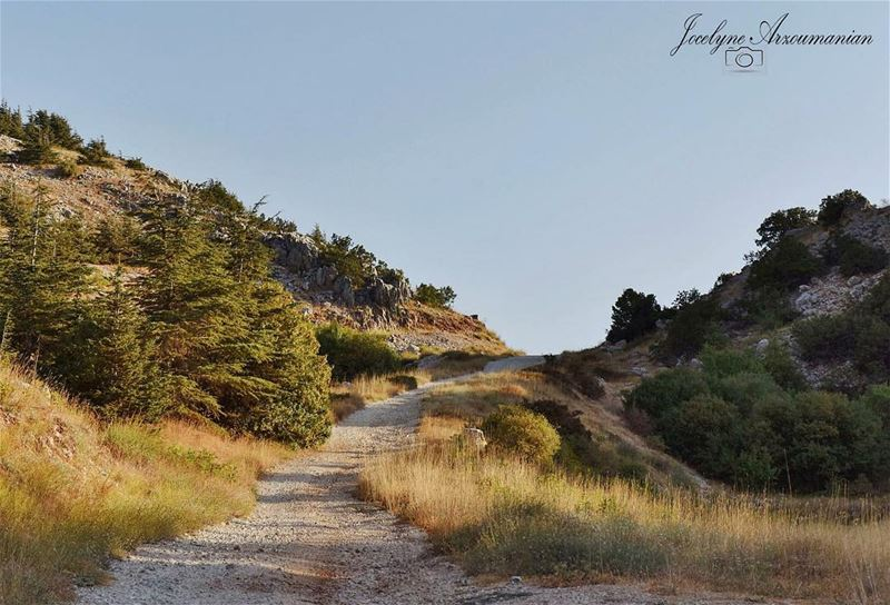 """You will never reach your destination if you never try."" destination ... (Al Shouf Cedar Nature Reserve)"