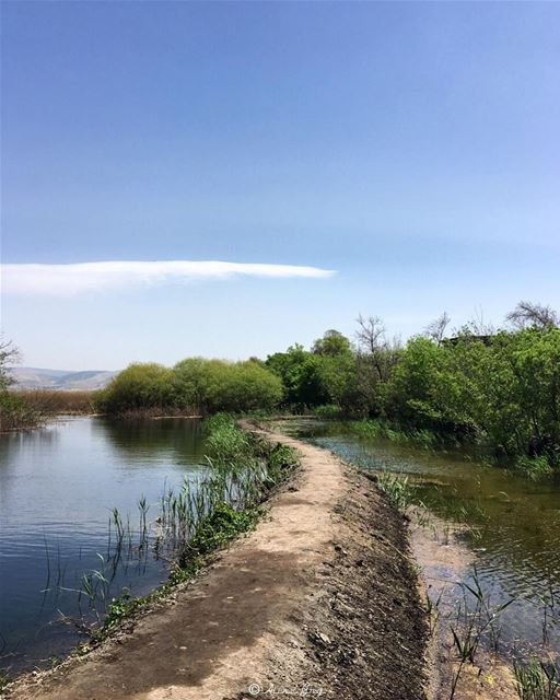 This is My Treadmill 🌳🍃💚 bekaa ammiq westbekaa wetlands outdoor ... (`Ammiq, Béqaa, Lebanon)