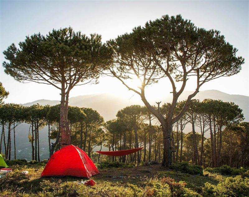Home is where you pitch your tent ! 🏕🌲.......... lebanon ...