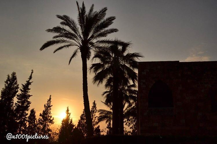 "Because when you stop and look around, this life is pretty amazing.""Dr.... (Byblos, Lebanon)"