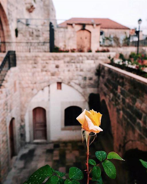 💛🌿 (Deïr El Qamar, Mont-Liban, Lebanon)