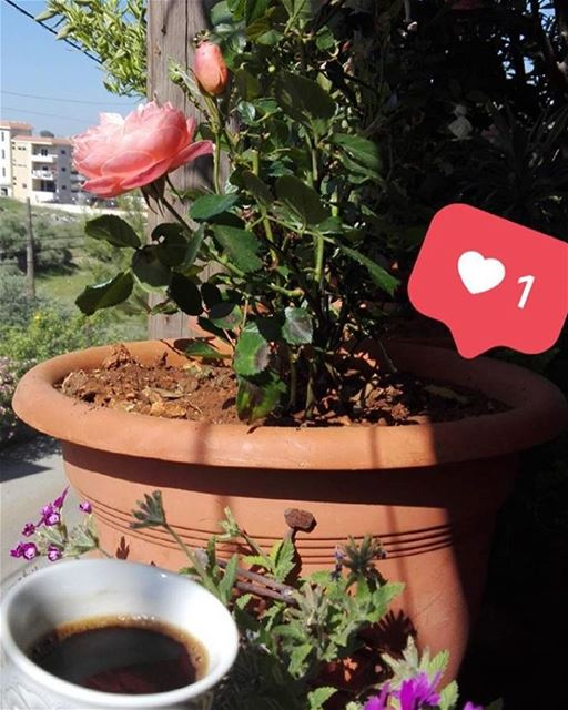Morning b beit el day3a 🌸🌺 lebanese_in_sweden livelovelebanon ...