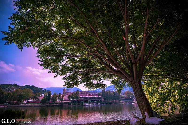 nature goose lake tree sky blue green naturephotography ...