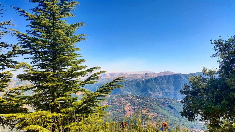Lebanon cedar sky clouds liban nature scene scenery magical ... (Mar Charbel Aanaya)