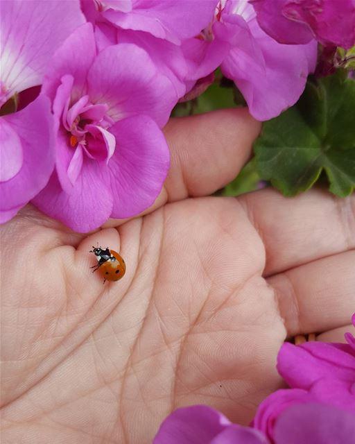 nature flowers lovely ladybug plants garden live love aley lebanon...