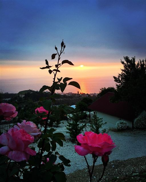 Sunset and a rose 🌞🌹🌊 ... (Enn Namoura, Mont-Liban, Lebanon)