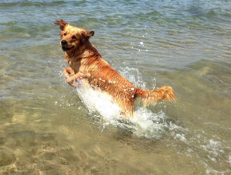 dog beach sunnyday funday sea summervibes positivevibes relaxtime ...