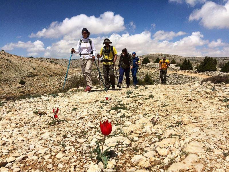 Jerd el Akoura mountaintulip akoura sundayhikes hiking keepmoving ... (Akoura, Mont-Liban, Lebanon)