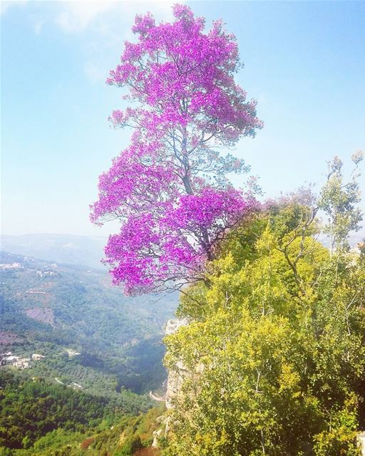 mountains  mothernature  mood  treelovers  edited  adaytoremember ... (Jezzîne, Al Janub, Lebanon)