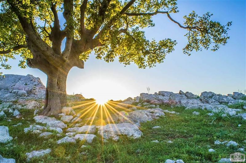 أسعد الله صباحكم بكل خير ☺ sunriselebanon sunsetlebanon sun ...