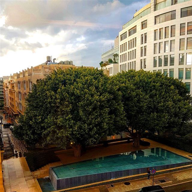 Big Beirut Trees at Sunset travel lebanon beyrouth liban voyage ... (Samir Kassir Garden Dt)