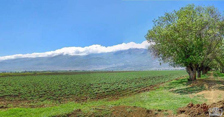 عندما تعانق الغيوم جبال لبنان ammiq ammiqreserve lebanon ...