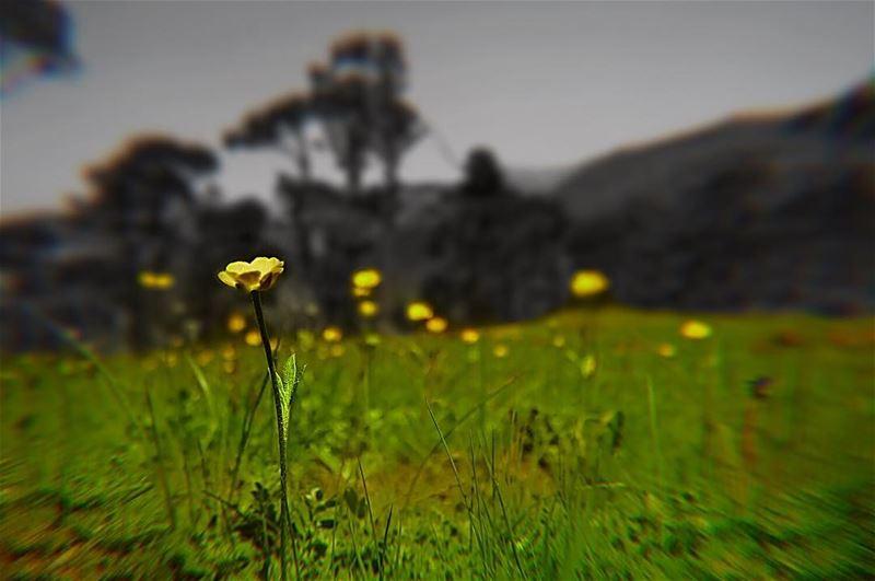 'nature does not hurry, yet everything is accomplished...''''... (Baskinta, Lebanon)