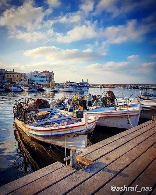 سميتك الجنوبسميتك النوارس البيضاء والزوارقسميتك الأطفالَ يلعبونَ بالزنابق (Tyre Fishermen Port.)