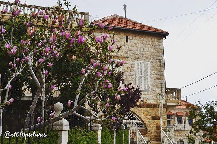 Steel Magnolias!! ... photos photography discover lebanon travel ... (Douma, Liban-Nord, Lebanon)