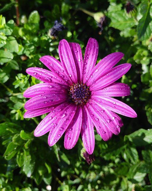 Have a nice Daisy !! ...... lebanon lebanon_hdr livelovelebanon ...
