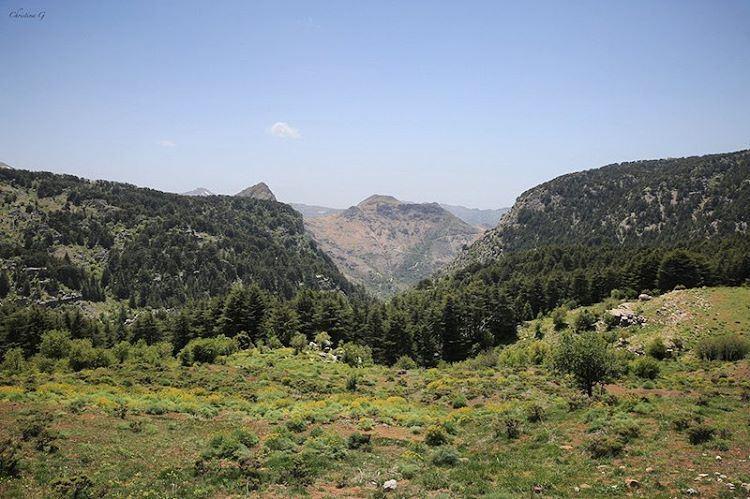 The beautiful reserve of Tannourine 🌲 a7labaladbil3alam photo love ... (Arz Tannoûrîne)