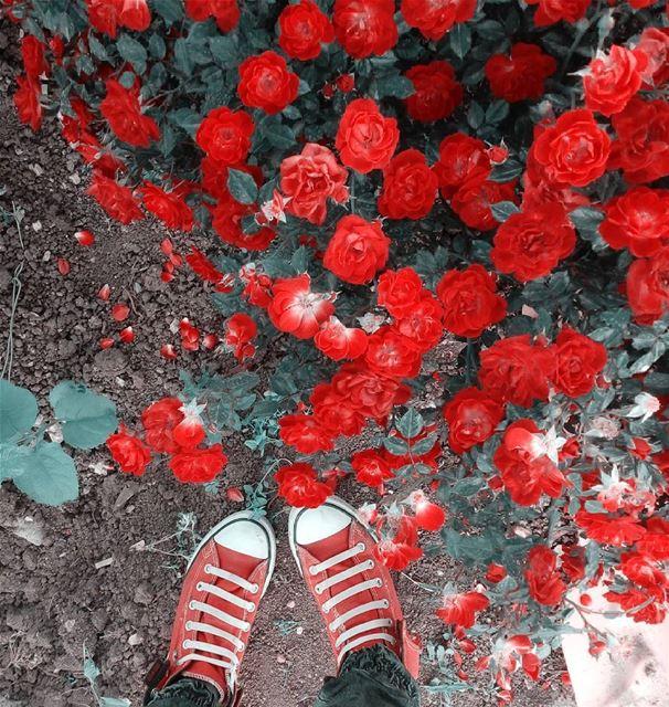 シAweSomeNesSツ photographer flower mycapture instagram lebanoninsta... (West Bekaa)