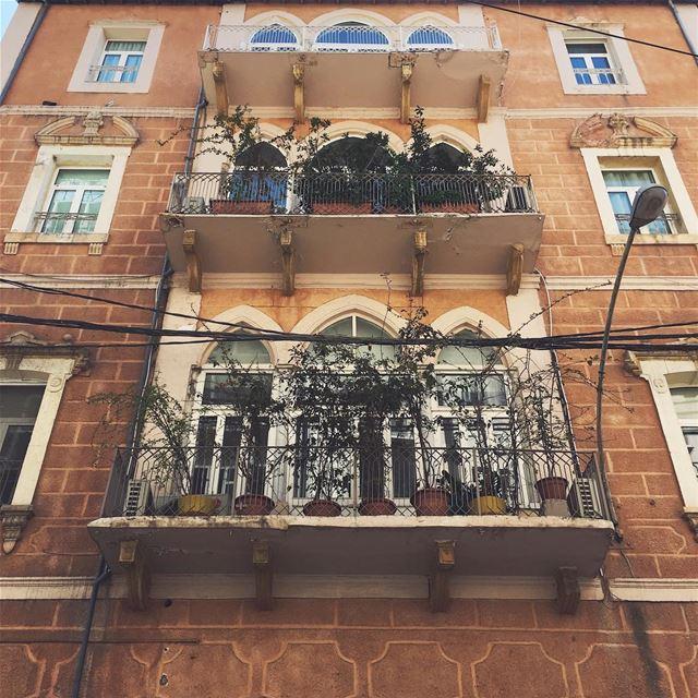 balcony gardens 🌱
