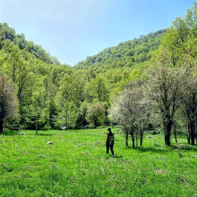 Happiness does grow on trees 🌳🌳🌳 hike nature green mountains ... (Ehmej, Mont-Liban, Lebanon)