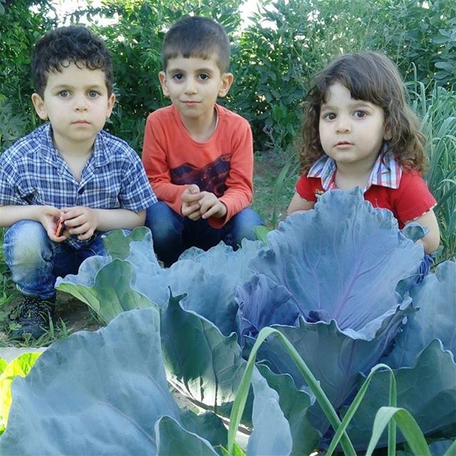The cuties and the purple cabbage 🙊🙊🙈 cabbage シAweSomeNesSツ cute ...