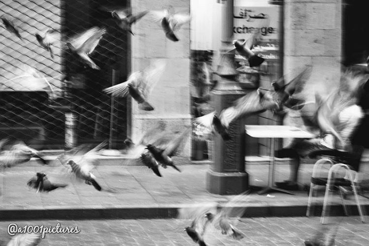 photos photography blackandwhite nikon beirut lebanon ... (Downtown Beirut)